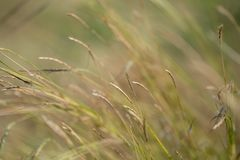 布朗与阳光的草地 免版税库存照片