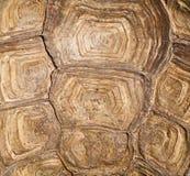 布朗乌龟壳背景 免版税库存照片
