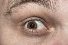 布朗人` s眼睛,惊奇和开敞 免版税库存图片