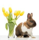 布朗兔宝宝是有黄色郁金香的近的花瓶 免版税库存照片