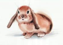 布朗兔宝宝 库存图片