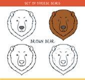 布朗北美灰熊 设置面孔,在线的头熊 向量例证