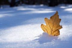 在雪的布朗叶子 免版税库存照片