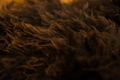 布朗和橙色毛皮纹理宏指令 免版税库存照片