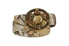 布朗和白色蛇皮带有金黄菩萨扣的在白色背景 免版税库存图片