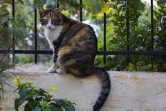 布朗和黄色猫在庭院篱芭栖息 免版税库存图片
