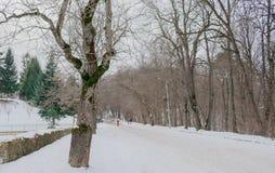布朗和绿色冬天 库存图片