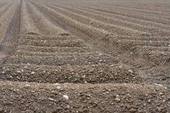 布朗土壤领域农业地面 库存照片