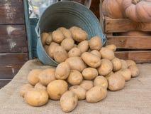 布朗土豆铺开老铁用桶提在黄麻texti 库存图片