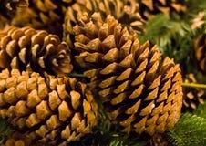 布朗在一个绿色云杉的分支的背景的锥体特写镜头 免版税库存照片