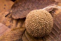 布朗在一片干燥叶子的荚胶囊作为秋天背景 图库摄影