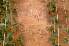 布朗在小分支树背景之间的水泥墙壁 免版税库存图片