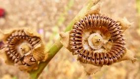 布朗在沙漠烘干了花 库存照片