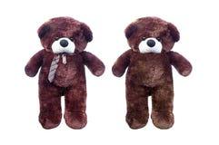 布朗在白色隔绝的玩具熊 免版税库存图片