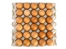 布朗在纸盒箱子的鸡鸡蛋 裁减路线 免版税库存照片