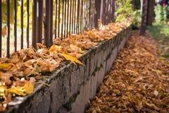布朗在边路的下落的秋叶 免版税库存照片