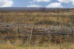 布朗在领域秋天把篱芭编成辫子 库存图片