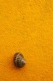 布朗在黄色墙壁上的蜗牛壳 库存图片