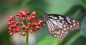 布朗察觉了蝴蝶坐红色花 免版税库存照片