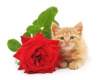 布朗小猫和一朵红色玫瑰 免版税库存照片