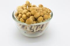 布朗山毛榉蘑菇 免版税库存照片