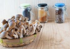 布朗山毛榉,布纳shimeji蘑菇 图库摄影
