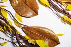 布朗干燥分支、棕色木兰叶子和黄色秋天leav 图库摄影