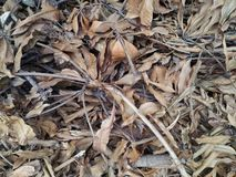 布朗干燥叶子和枝杈在地面背景 图库摄影