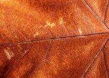 布朗干燥叶子背景 免版税库存照片