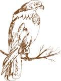 布朗强的鹰 库存图片