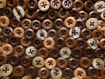 布朗按钮几片树荫  库存图片