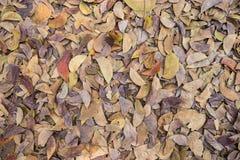布朗放置在地面上的下落的叶子 免版税库存照片