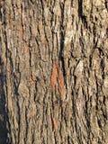 布朗木头构造细节 库存照片