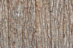布朗木树皮板条纹理背景 免版税库存照片