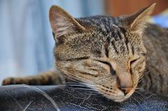 布朗条纹逗人喜爱的懒惰猫在一个好天睡觉 免版税库存照片