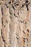 布朗概略的树皮纹理 图库摄影