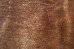 布朗毛皮纹理 图库摄影