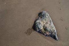 布朗沙子与岩石和在海滩。 免版税库存图片