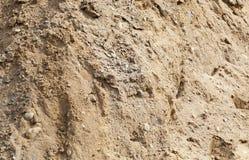 布朗沙子纹理 库存图片