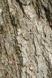 布朗灰色树皮 免版税库存照片