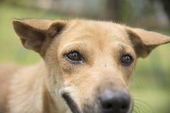布朗狗在草坪 免版税库存图片