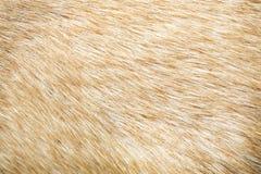 布朗狗皮肤纹理,自然背景 免版税图库摄影