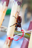 布朗甲虫 库存图片