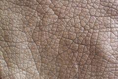 布朗皮革背景纹理 库存图片