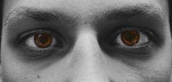 布朗眼睛 库存照片