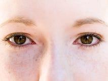 布朗眼睛 库存图片