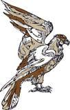 布朗老鹰 免版税图库摄影