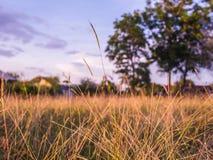 布朗草在春天 库存图片