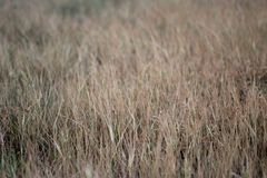 布朗草离开样式纹理背景 库存照片