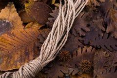 布朗荚、胶囊和一条绳索在一片干燥叶子作为秋天backg 免版税库存图片